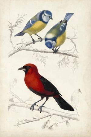 D'Orbigny Birds III