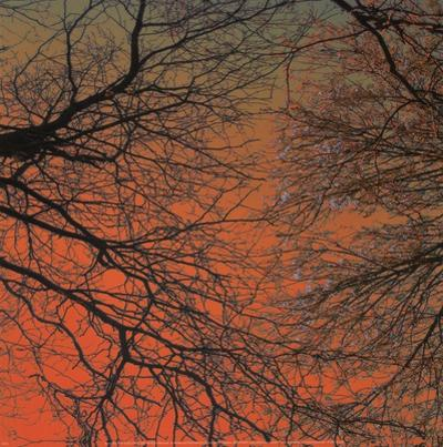 Sunset Forest III