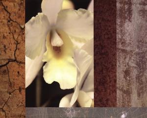 Tropical Whites I by M.J. Lew