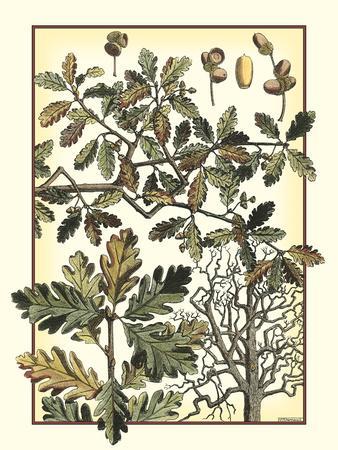 Arts and Crafts Oak