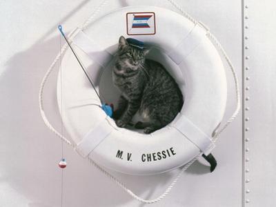 M.V. Chessie