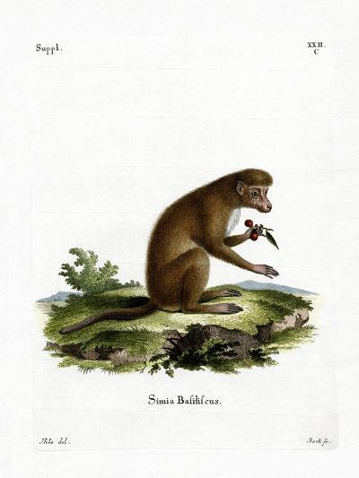 Macaque--Giclee Print