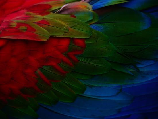 Macaw Plumage Detail-Diego Lezama-Photographic Print