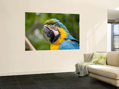 Macaw-Brian Cruickshank-Wall Mural