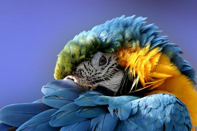 Macaw-Netfalls-Photographic Print