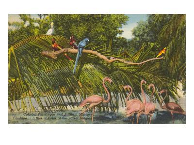 Macaws, Flamingos, Cockatoo, Florida--Art Print