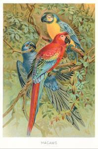 Macaws in the Jungle