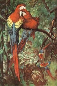 Macaws Nuzzling in Jungle