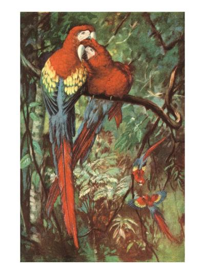 Macaws Nuzzling in Jungle--Art Print