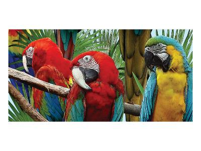 Macaws-Melinda Bradshaw-Art Print