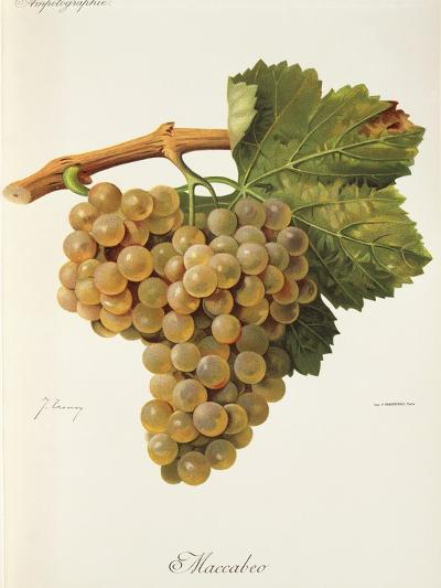 Maccabeo Grape-J. Troncy-Giclee Print