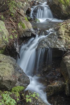 A Cascading Stream on Mount Tamalpais