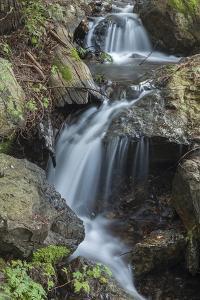 A Cascading Stream on Mount Tamalpais by Macduff Everton