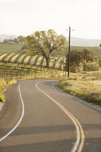 A Road and Vineyard in San Luis Obispo County Wine Country by Macduff Everton