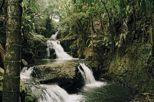 Onomea Falls in the Hawaii Tropical Botanical Gardens on the Hamakua Coast by Macduff Everton