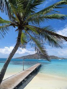 Palm Tree Hanging Over Beach Dock by Macduff Everton