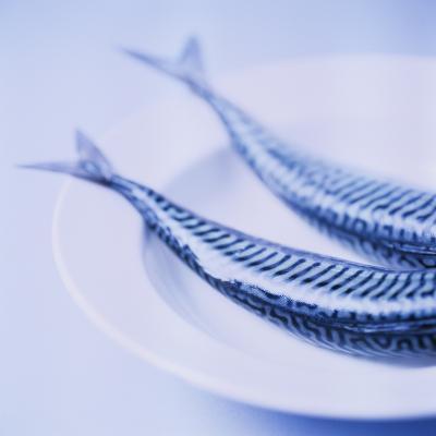 Mackerel-Cristina-Photographic Print