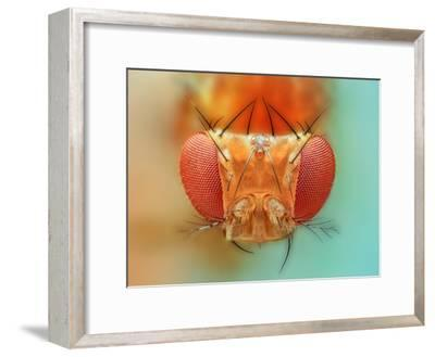 Macro, Insect, Spider, Bee, Stacking, Stack, Fly, Micro- vasekk-Framed Premium Photographic Print