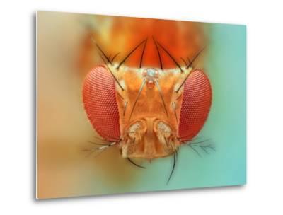 Macro, Insect, Spider, Bee, Stacking, Stack, Fly, Micro- vasekk-Metal Print