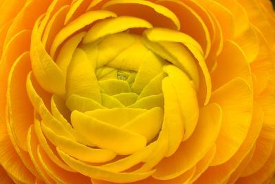 Macro of Yellow Flower for Background-fullempty-Photographic Print