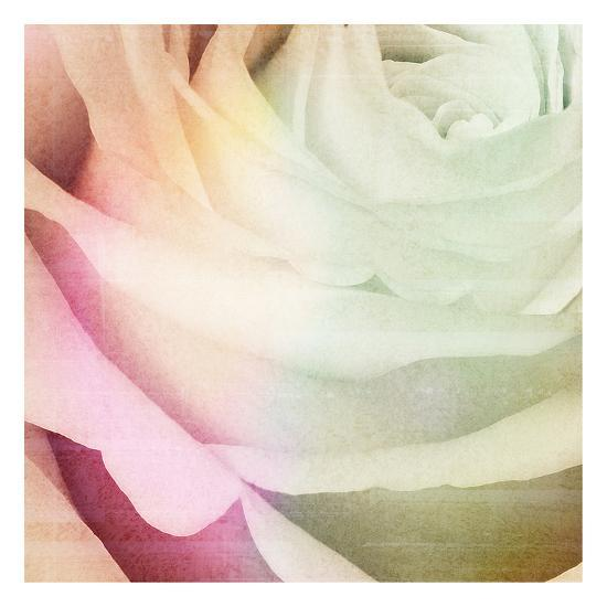 Macro Rose-Kristin Emery-Art Print