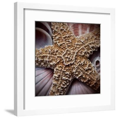 Macro Shells I-Rachel Perry-Framed Art Print