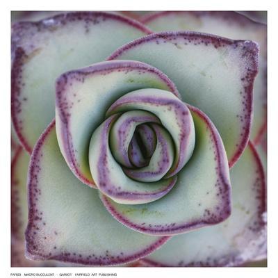 https://imgc.artprintimages.com/img/print/macro-succulent_u-l-f92zz20.jpg?p=0