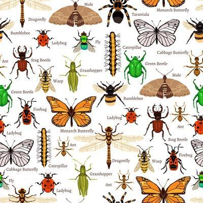 Flat Insects Seamless Pattern Vector Illustration