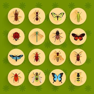 Insects round Button Flat Icons Set with Fly Dragonfly Bee Isolated Vector Illustration