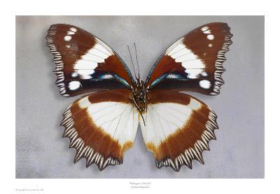 Madagascar Diadem-Richard Reynolds-Art Print