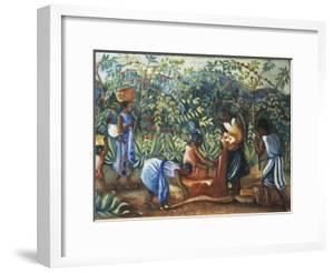 Madagascar, Harvesting Coffee Beans, 20th Century