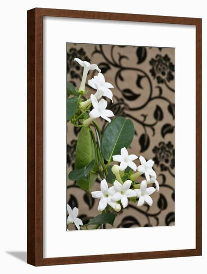 Madagascar Jasmine or Waxflower, Blossoms, Indoor Plant, Climbing Plant-Sweet Ink-Framed Photographic Print