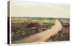 Madaket Moor, Nantucket, Massachusetts
