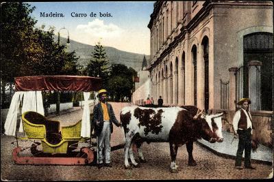 Madeira Portugal, Carro De Bois, Ochsenkarren Auf Schlitten--Giclee Print