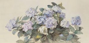 Hydrangeas by Madeleine Lemaire
