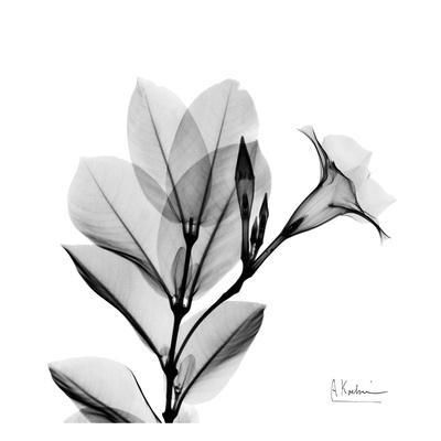 https://imgc.artprintimages.com/img/print/madelia-in-black-and-white_u-l-f5487l0.jpg?p=0