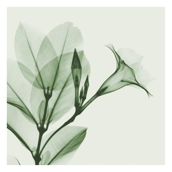 Madelia in Green-Albert Koetsier-Art Print