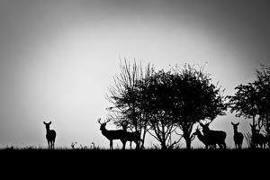 An Image Of Some Deer In The Morning Mist by magann