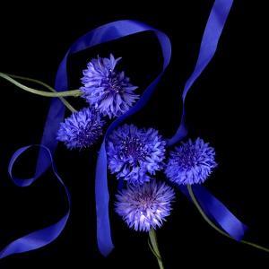 Blue Cornflowers by Magda Indigo