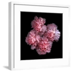 Pink Carnations by Magda Indigo