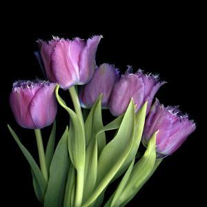 Pink Tulips 6 by Magda Indigo