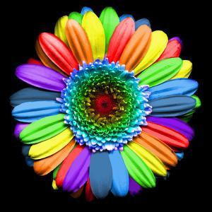 Rainbow Flower by Magda Indigo