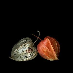 To Be And Not To Be - Physalis by Magda Indigo