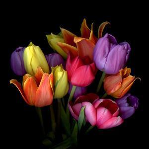tulips by Magda Indigo