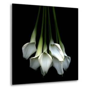 White Callas by Magda Indigo