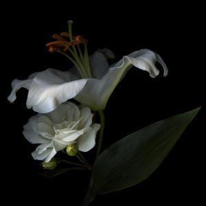 White Rose and White Lily by Magda Indigo