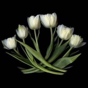 White Tulips by Magda Indigo