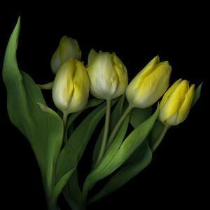 Yellow Tulips 3 by Magda Indigo