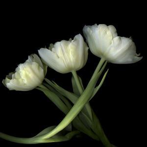 Yellow White Tulips 2 by Magda Indigo