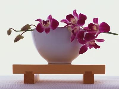 https://imgc.artprintimages.com/img/print/magenta-orchids-in-white-bowl_u-l-pzlwhh0.jpg?p=0